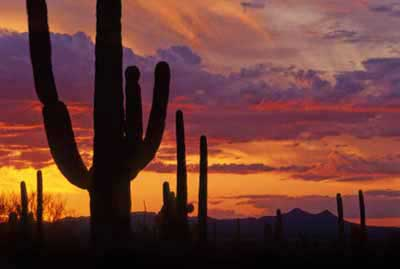 Arizona Sunsets Arizona Sunset Pictures