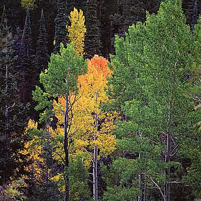 Fall in Flagstaff Arizona