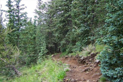 Humphreys Peak Trail - Forest Along The Trail
