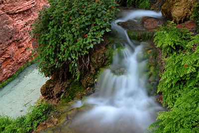 Picture of Spring Near Mooney Falls
