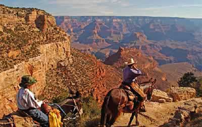 How Much Does A Helicopter Cost >> Mule Ride Options Into The Grand Canyon Rim