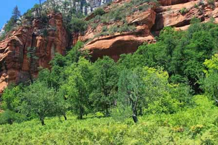 Distance From Sedona To Phoenix >> Oak Creek Canyon Scenic Drive Sedona Arizona